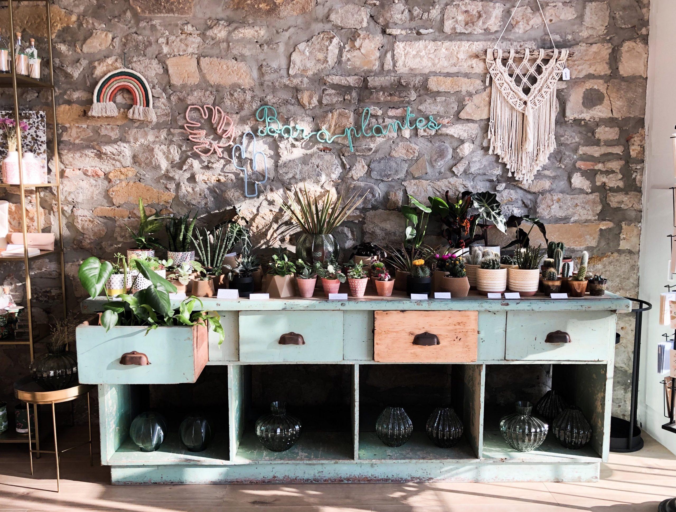 Bar à plantes Little Liamone