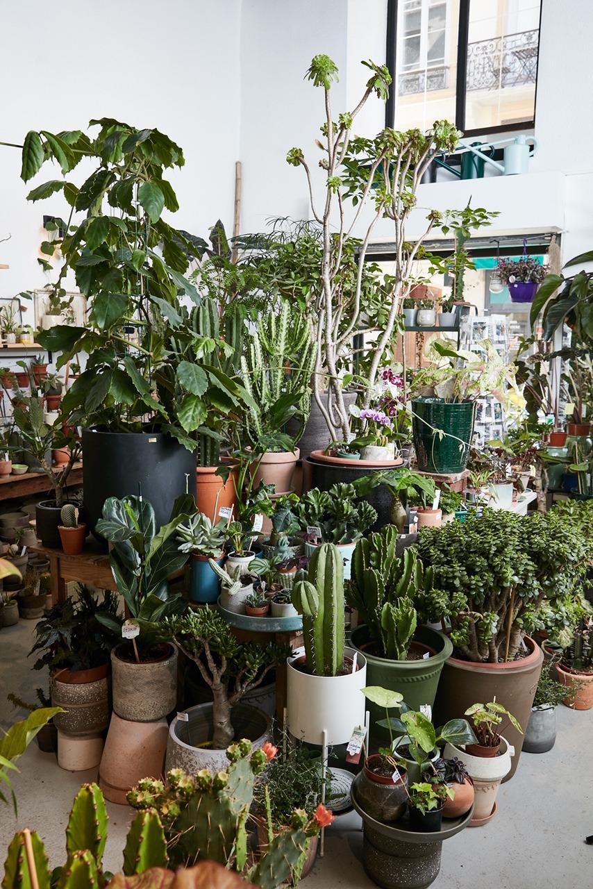 Jardinerie L'Oeil Végétal Lyon